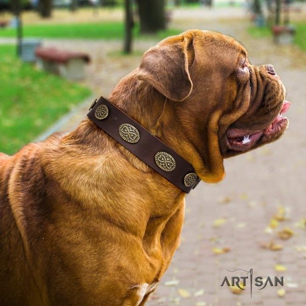Dogue de Bordeaux remarkable full grain natural leather collar for fancy walking