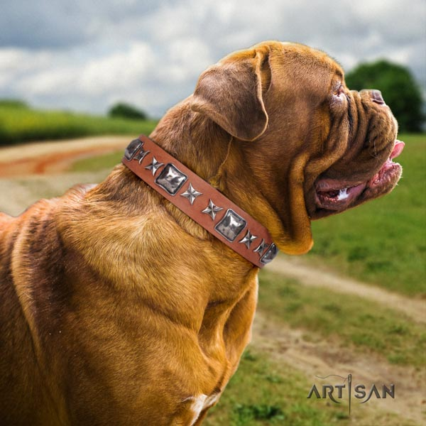 Dogue de Bordeaux decorated genuine leather collar with corrosion proof traditional buckle