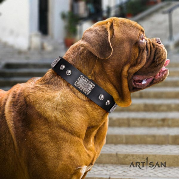 Dogue de Bordeaux trendy leather collar for handy use
