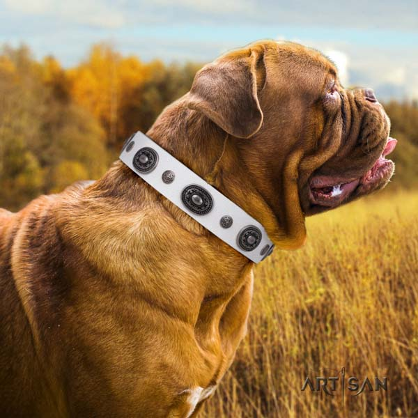 Dogue de Bordeaux fashionable full grain leather collar for stylish walking