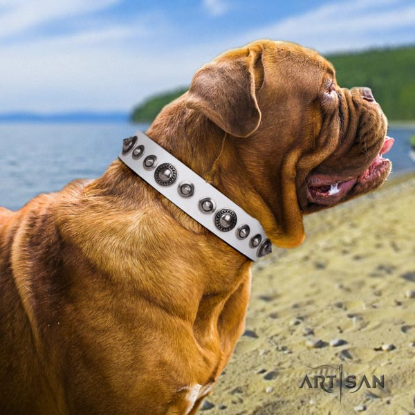 Dogue de Bordeaux studded full grain natural leather collar with rust resistant D-ring