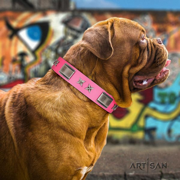 Dogue de Bordeaux stunning leather collar for easy wearing