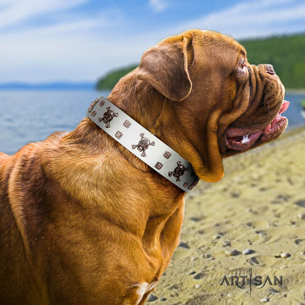 Dogue de Bordeaux comfortable wearing dog collar of extraordinary quality natural leather