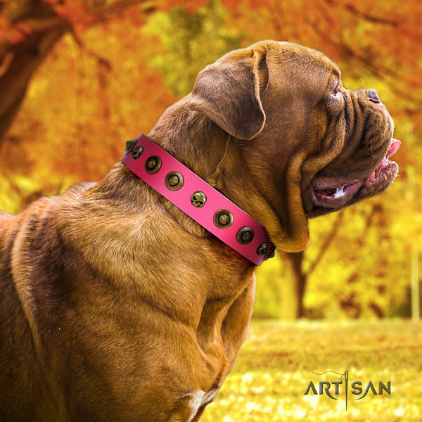 Dogue de Bordeaux walking dog collar of top quality natural leather