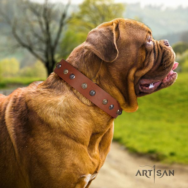 Dogue de Bordeaux stunning full grain genuine leather collar for handy use