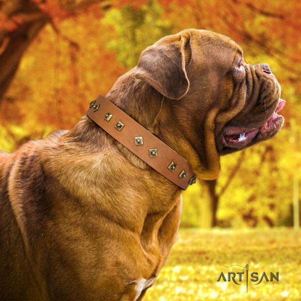 Dogue de Bordeaux exceptional full grain genuine leather collar for stylish walking