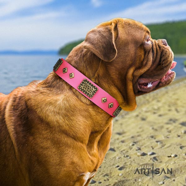 Dogue de Bordeaux fashionable full grain leather collar for walking