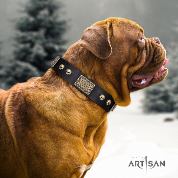 Dogue de Bordeaux extraordinary full grain natural leather collar for fancy walking