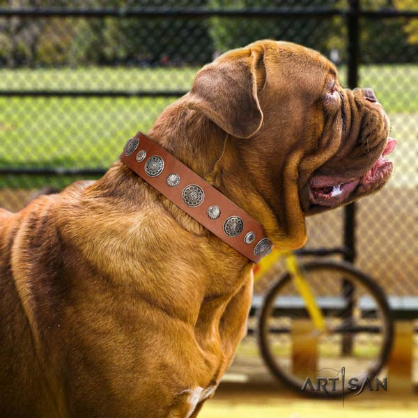 Dogue de Bordeaux inimitable natural genuine leather collar for everyday use