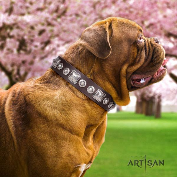 Dogue de Bordeaux studded genuine leather collar with rust-proof traditional buckle