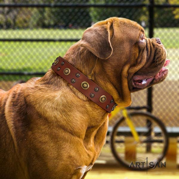 Dogue de Bordeaux unusual full grain genuine leather collar for walking