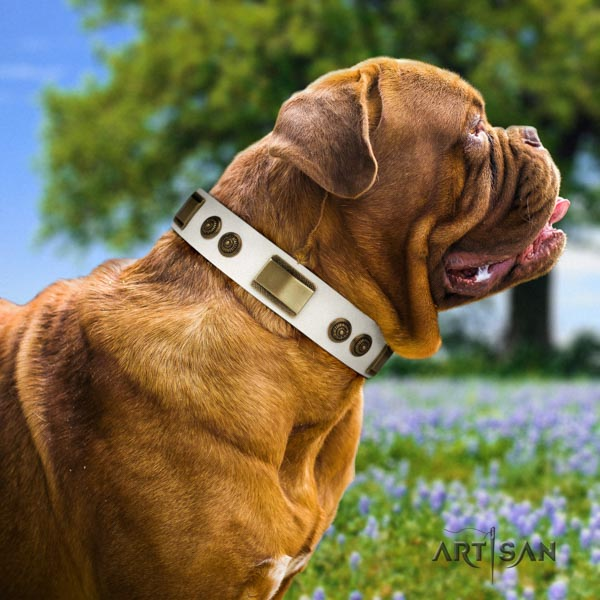 Dogue de Bordeaux remarkable genuine leather collar for walking