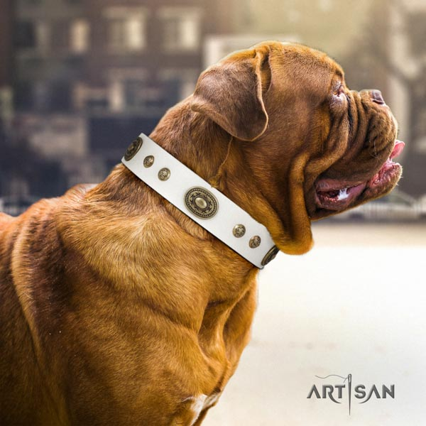 Dogue de Bordeaux amazing natural genuine leather collar for basic training