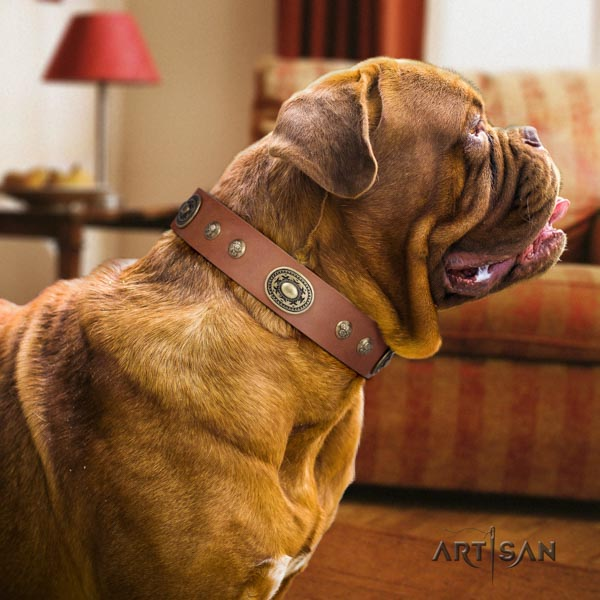 Dogue de Bordeaux significant full grain natural leather collar for stylish walking