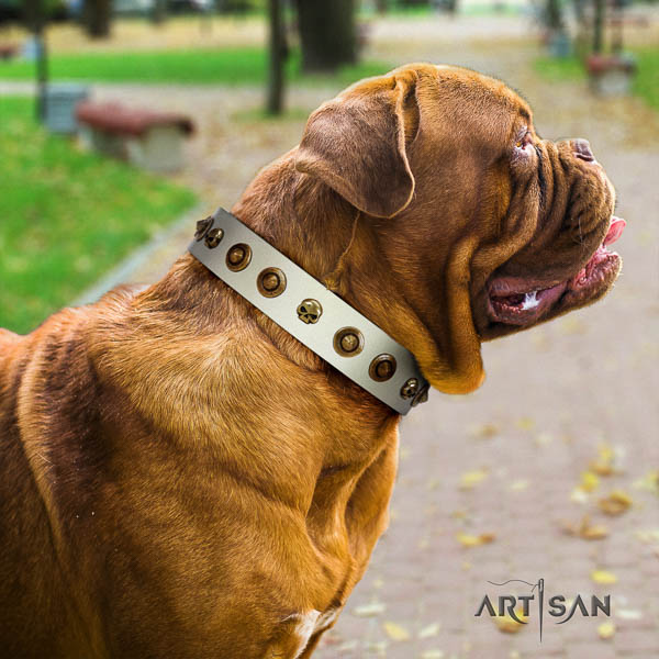 Dogue de Bordeaux comfy wearing dog collar of trendy leather