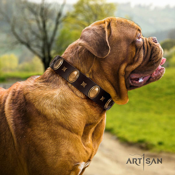 Dogue de Bordeaux basic training dog collar of fashionable genuine leather
