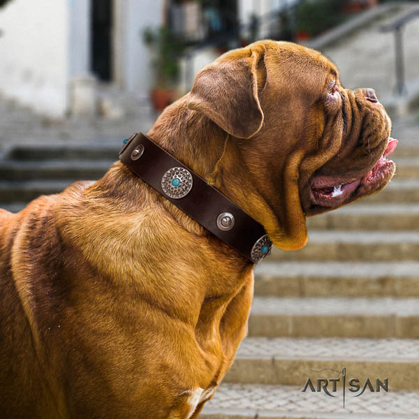 Dogue de Bordeaux comfy wearing dog collar of extraordinary quality natural leather