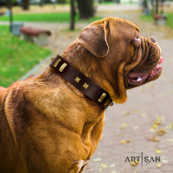 Dogue de Bordeaux daily use dog collar of exceptional quality leather