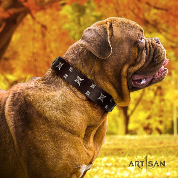 Dogue de Bordeaux everyday use dog collar of trendy genuine leather