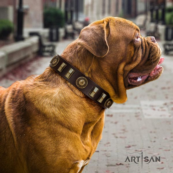 Dogue de Bordeaux daily walking dog collar of best quality genuine leather