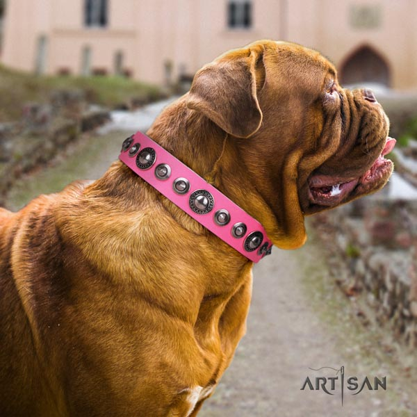 Dogue de Bordeaux studded natural genuine leather collar with rust-proof D-ring