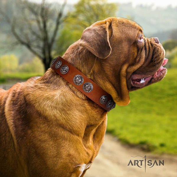 Dogue de Bordeaux fancy walking dog collar of remarkable quality natural leather