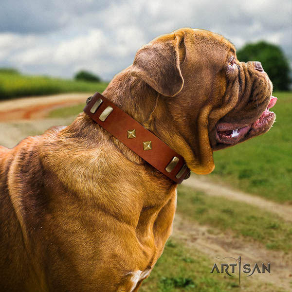 Dogue de Bordeaux daily use dog collar of significant quality leather