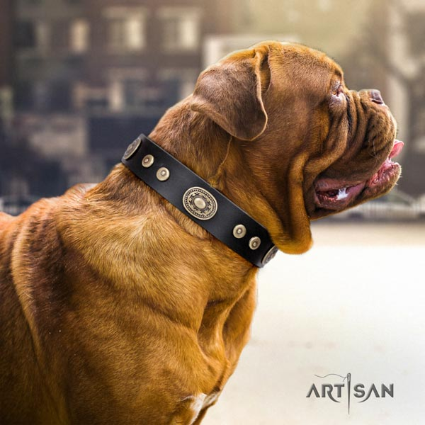 Dogue de Bordeaux adorned genuine leather collar with rust-proof buckle