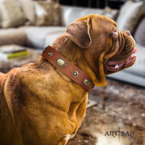 Dogue de Bordeaux unusual full grain leather collar for everyday walking