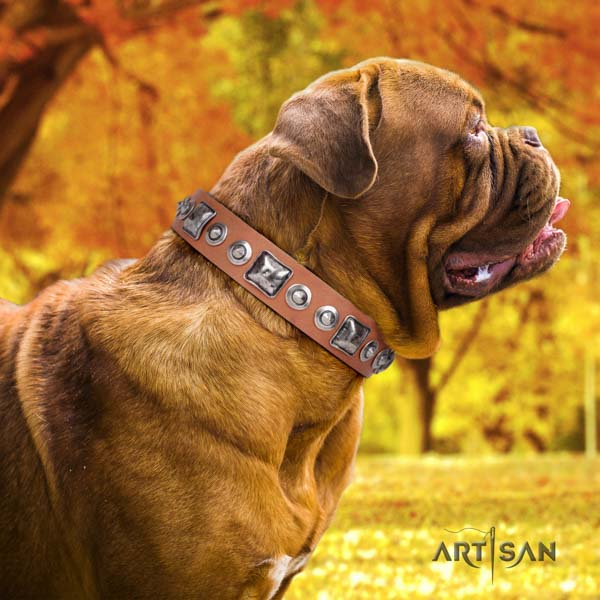 Dogue de Bordeaux adorned full grain natural leather collar with rust resistant buckle