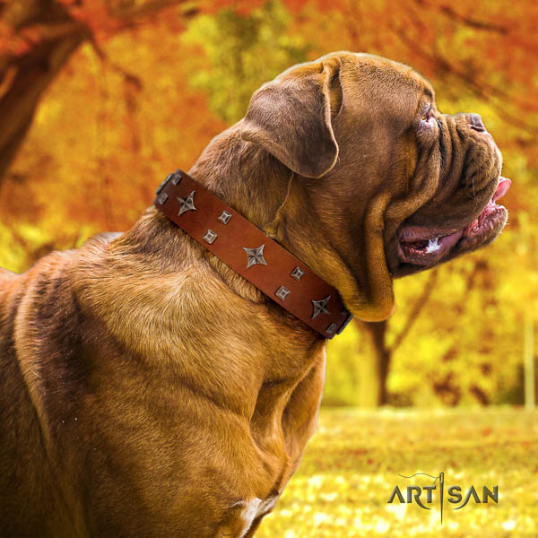 Dogue de Bordeaux basic training dog collar of trendy natural leather