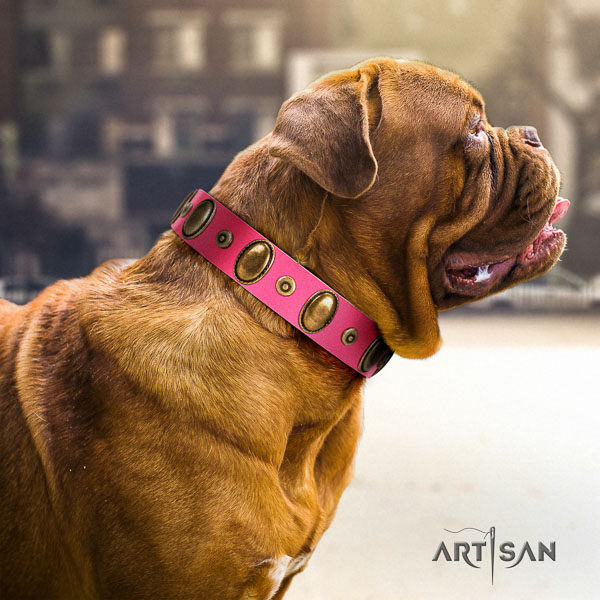 Dogue de Bordeaux everyday use dog collar of awesome quality genuine leather