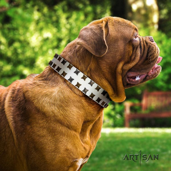 Dogue de Bordeaux everyday walking dog collar of fine quality genuine leather