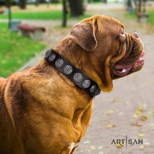 Dogue de Bordeaux extraordinary full grain leather dog collar