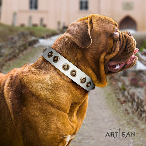 Dogue de Bordeaux daily walking dog collar of awesome quality leather