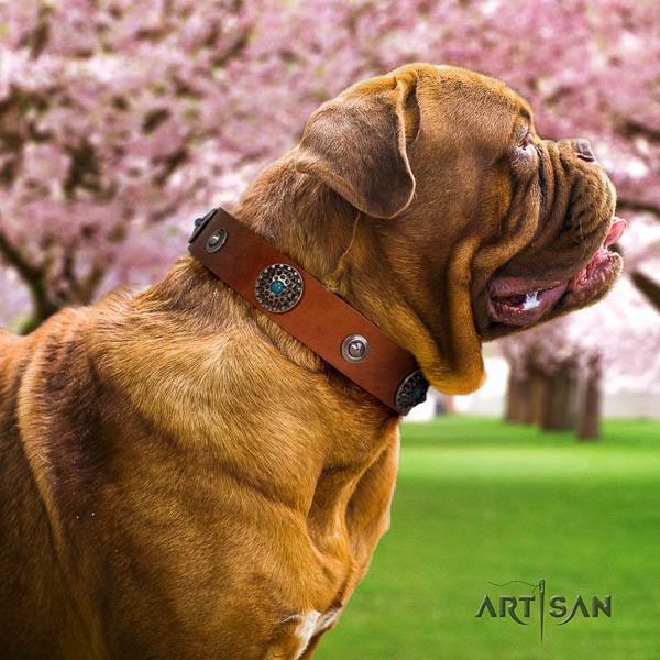 Dogue de Bordeaux comfy wearing dog collar of incredible quality leather