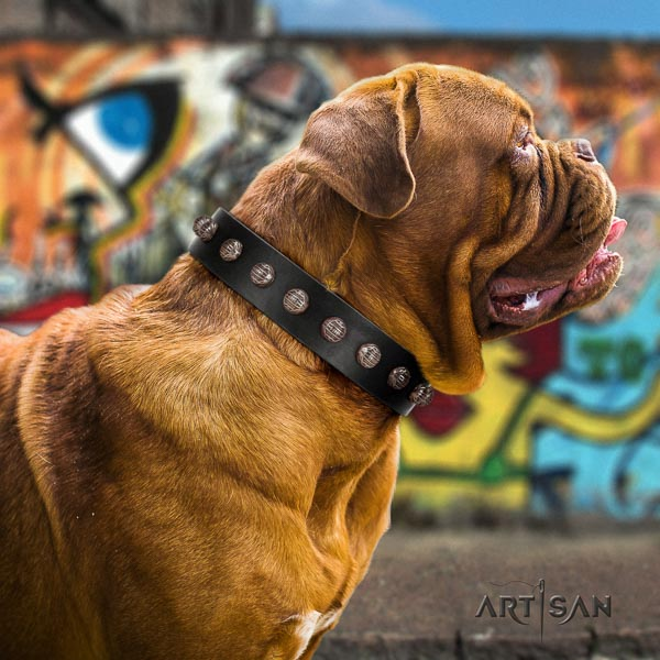 Dogue de Bordeaux unique leather dog collar