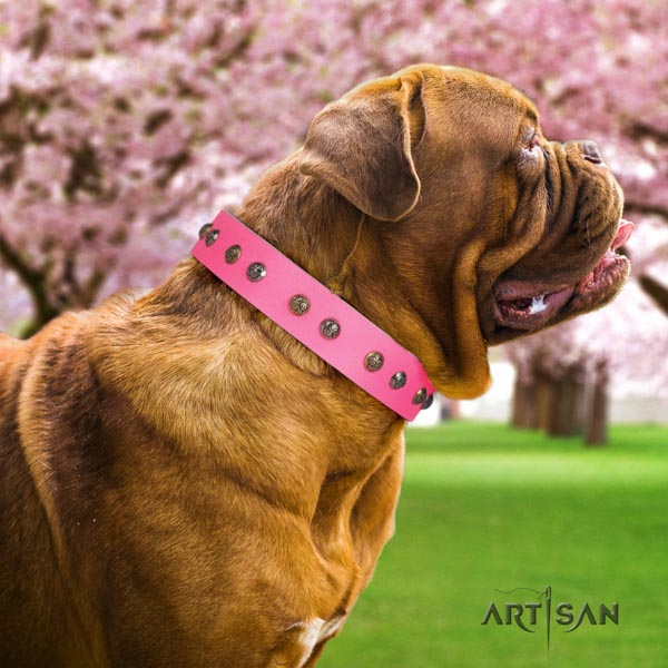 Dogue de Bordeaux amazing genuine leather collar for comfy wearing