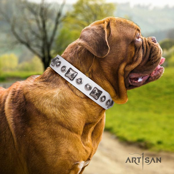 Dogue de Bordeaux studded genuine leather collar with strong buckle