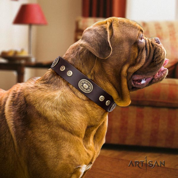 Dogue de Bordeaux decorated full grain natural leather collar with corrosion proof hardware