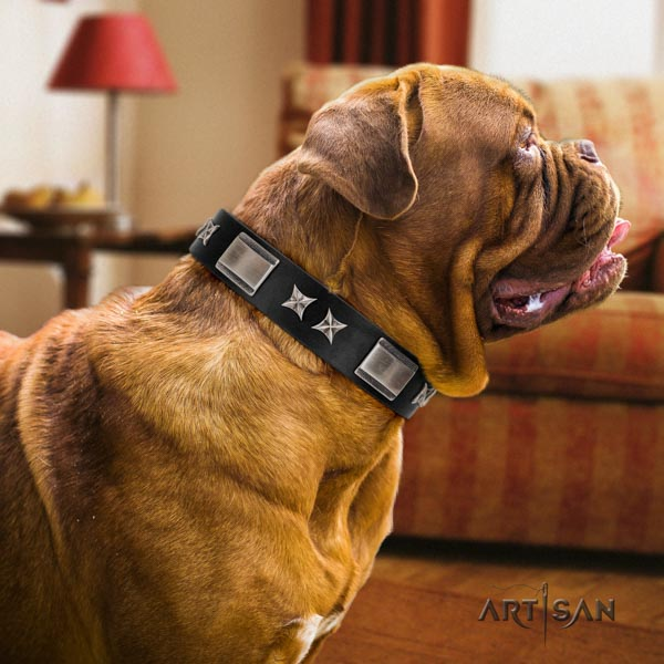 Dogue de Bordeaux unusual genuine leather collar for daily use