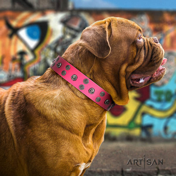 Dogue de Bordeaux significant full grain genuine leather dog collar