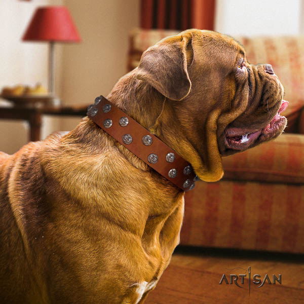 Dogue de Bordeaux dog collar of significant quality leather for walking