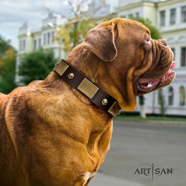 Dogue de Bordeaux basic training dog collar of comfortable leather