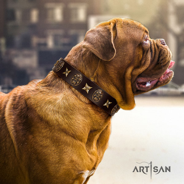 Dogue de Bordeaux walking dog collar of incredible quality natural leather