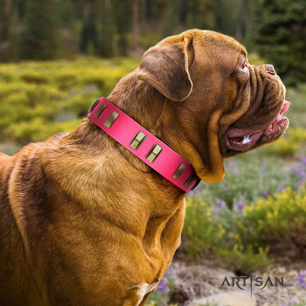 Dogue de Bordeaux everyday use dog collar of fashionable natural leather