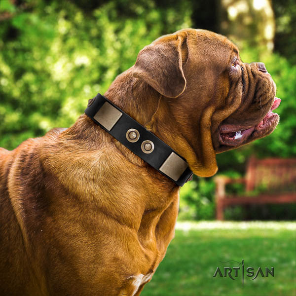 Dogue de Bordeaux daily use dog collar of comfortable leather