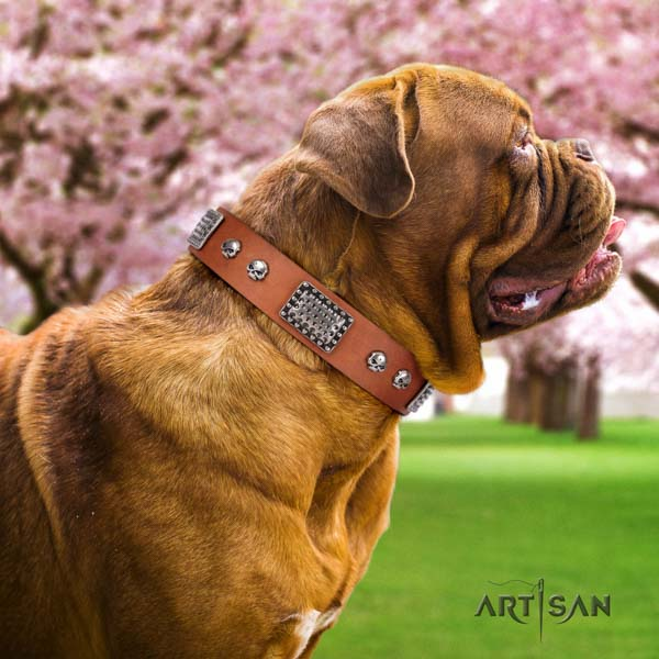 Dogue de Bordeaux designer genuine leather collar for comfy wearing