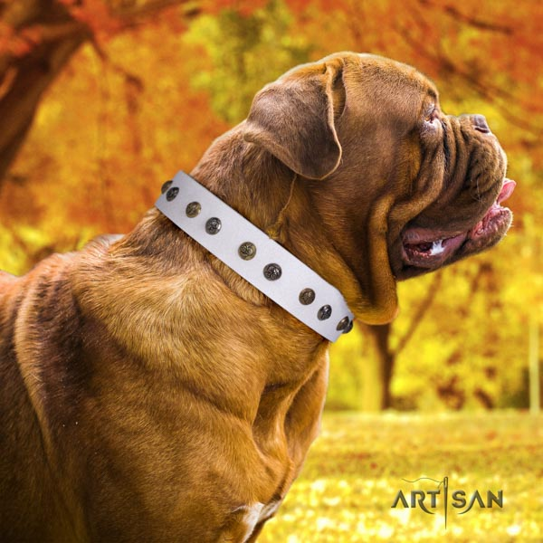 Dogue de Bordeaux fashionable natural genuine leather collar for stylish walking