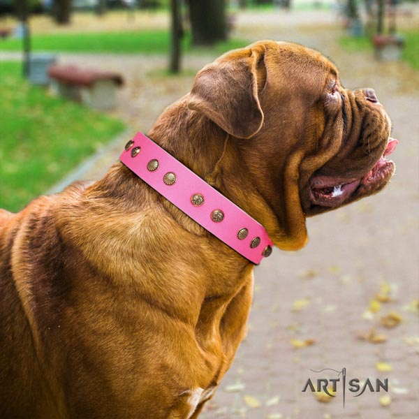 Dogue de Bordeaux stunning leather collar for walking